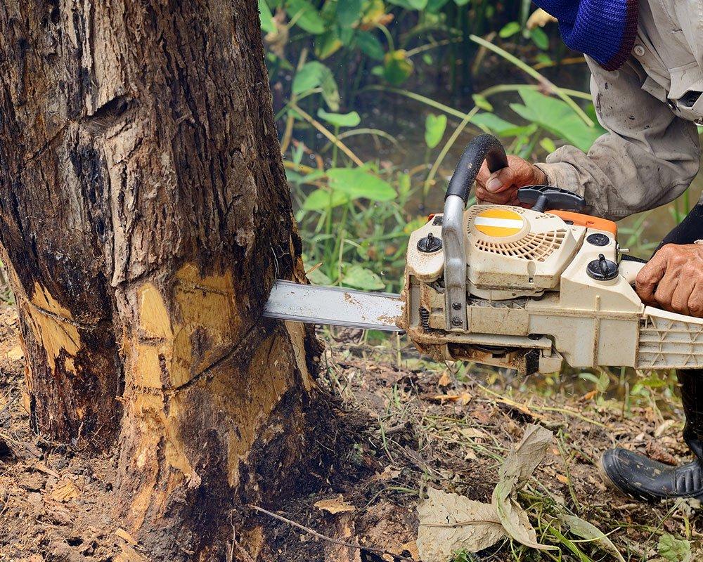 Tree Service Palm Coast - Tree Removal