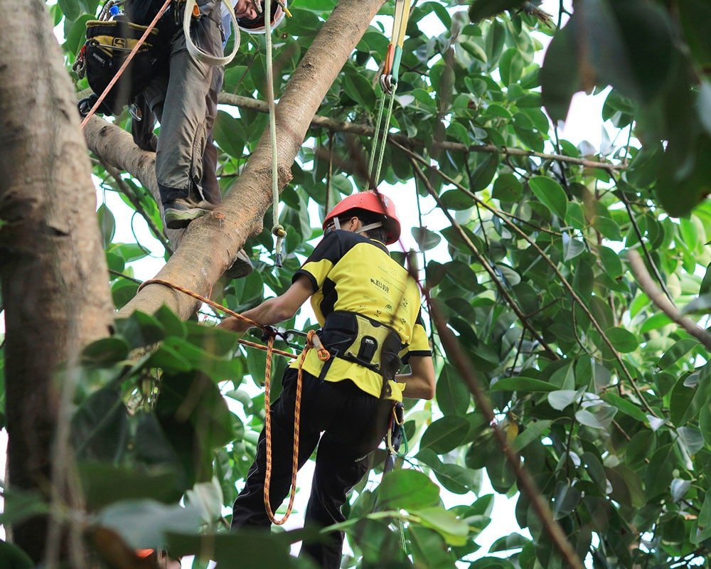 Tree Service Palm Coast - Emergency Tree Removal