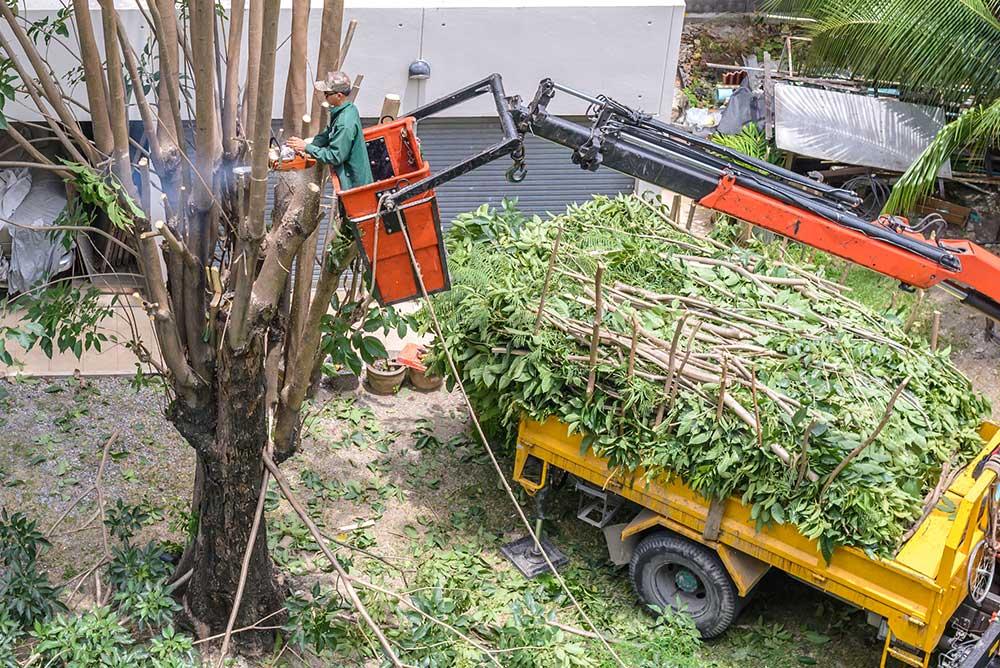 Tree Service Palm Coast - Tree Pruning